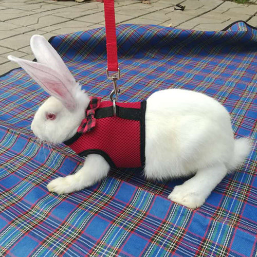 Rabbit Harness