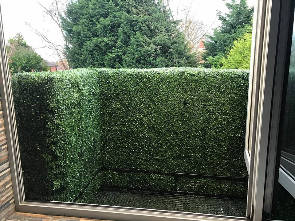 Box hedging privacy fence