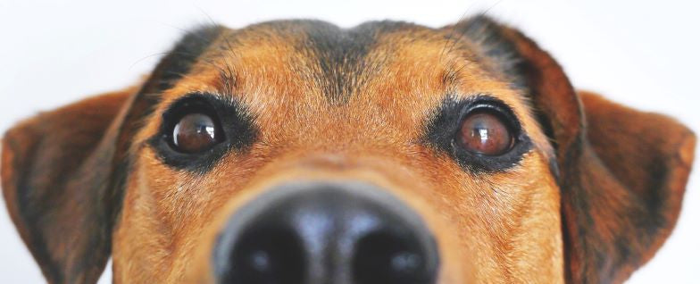 Through the Eyes of Your Dog