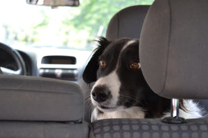Pet Tips For Vacationing By Car