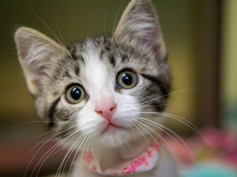 June is National Adopt-A-Cat Month: Millions Of Cats Need Your Help