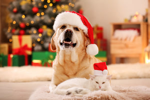 Pets and the Holidays: Protect Your Best Friend from Holiday Hazards