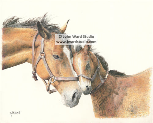 Affection by John Ward www.jwardstudio.com mother and foal horses love affection