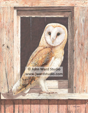 Barn Owl by John Ward www.jwardstudio.com bird wildlife brown owl farm