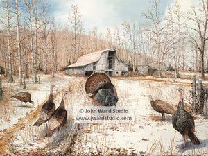 Barnyard Gobblers by John Ward www.jwardstudio.com turkey barn snow farm