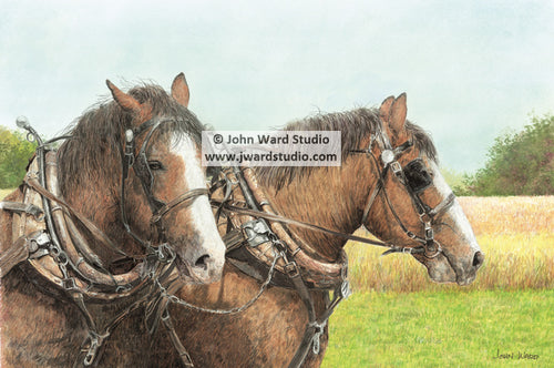 Beau and Jack two horses by John Ward draft horses farming Kentucky