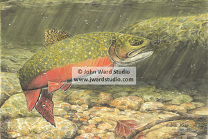 Brook Trout by John Ward www.jwardstudio.com fishing