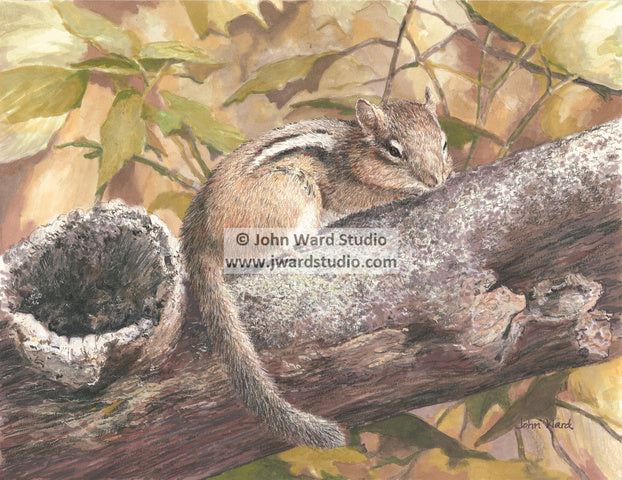 Chipmunk by John Ward www.jwardstudio.com wildlife