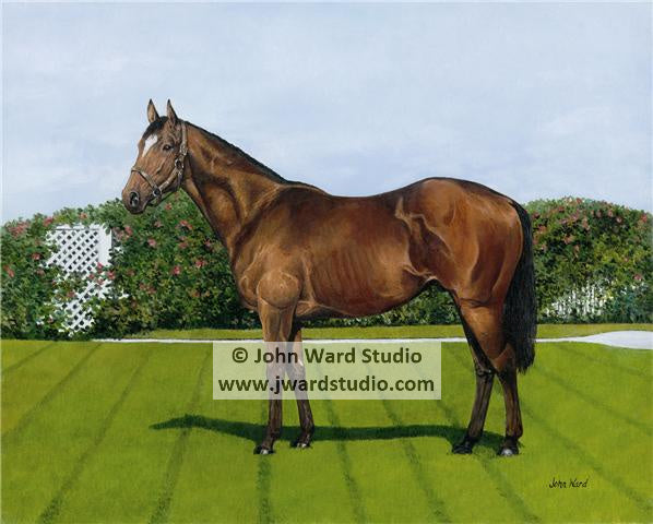 Conformation by John Ward www.jwardstudio.com horse