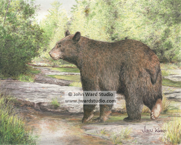 Creek Crossing bear by John Ward www.jwardstudio.com wildlife black bear