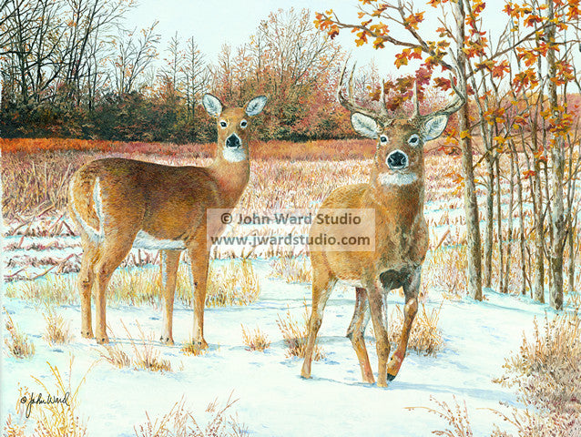 Curiosity deer hunting by John Ward www.jwardstudio.com