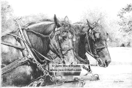 Draft Horses in black and white by John Ward farm horses
