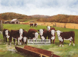 Hereford Autumn by John Ward www.jwardstudio.com cattle farm Kentucky Hereford Association