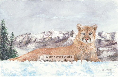 King of the Mountain by John Ward www.jwardstudio.com mountain lion wildlife snow mountain