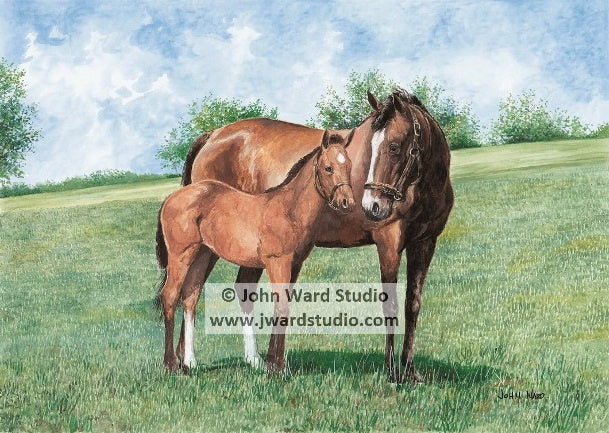 Mothers Love by John Ward mother and foal horse