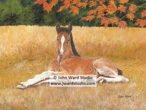 Playful by John Ward www.jwardstudio.com horse farm