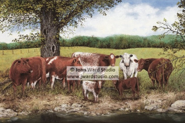 Red, White, and Roan by John Ward www.jwardstudio.com cattle farm Kentucky Shorthorn Association
