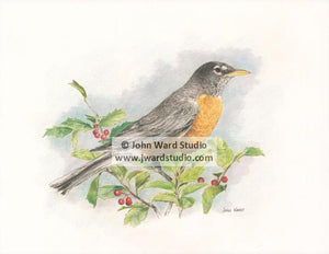 Robin by John Ward www.jwardstudio.com bird wildlife