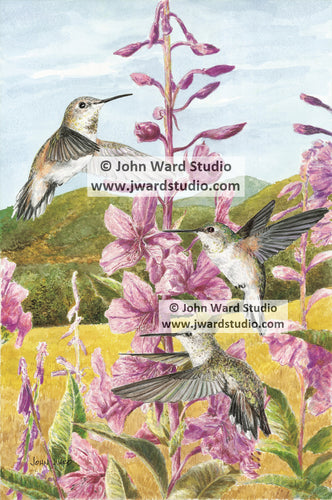 Rufous Hummingbird by Kentucky artist John Ward