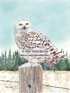 Snow Owl by John Ward www.jwardstudio.com wildlife bird fence