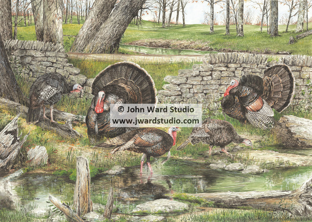 Strut'n by John Ward turkey www.jwardstudio.com turkey hunting rock wall
