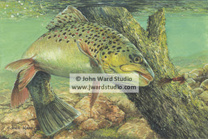Take the Bait by John Ward fishing trout