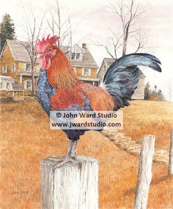 Wake Up Call by John Ward rooster crowing www.jwardstudio.com