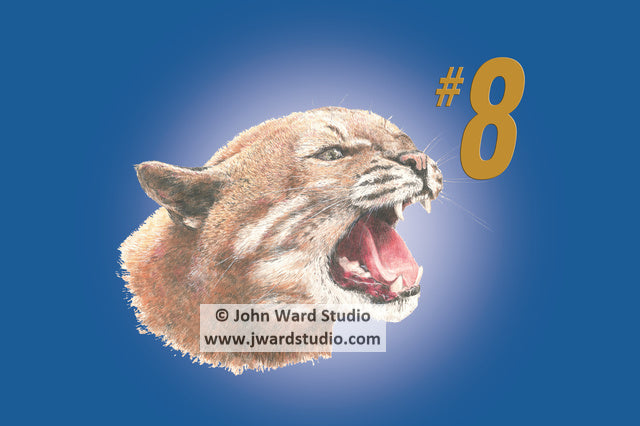 Wildcat #8 by John Ward www.jwardstudio.com UK Kentucky Wildcats