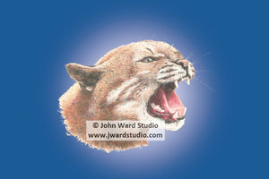 Wildcat blue background by John Ward www.jwardstudio.com wildlife