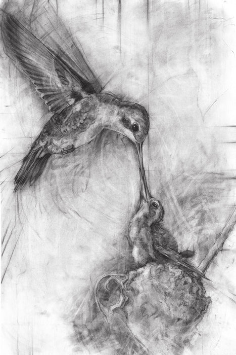 "Hummingbirds Nurture B/W - Original 27""x40"""