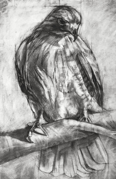Red Tailed Hawk - Open Edition, Signed Fine Art Print