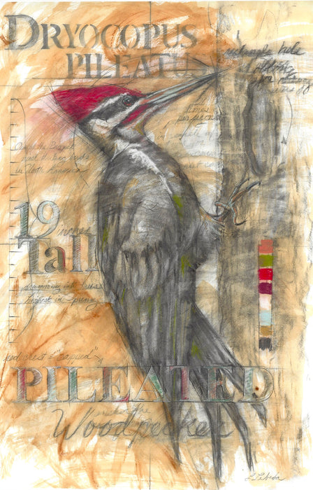 Pileated Woodpecker - Signed, Limited Edition Fine Art Print