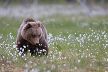Bear Among Flowers