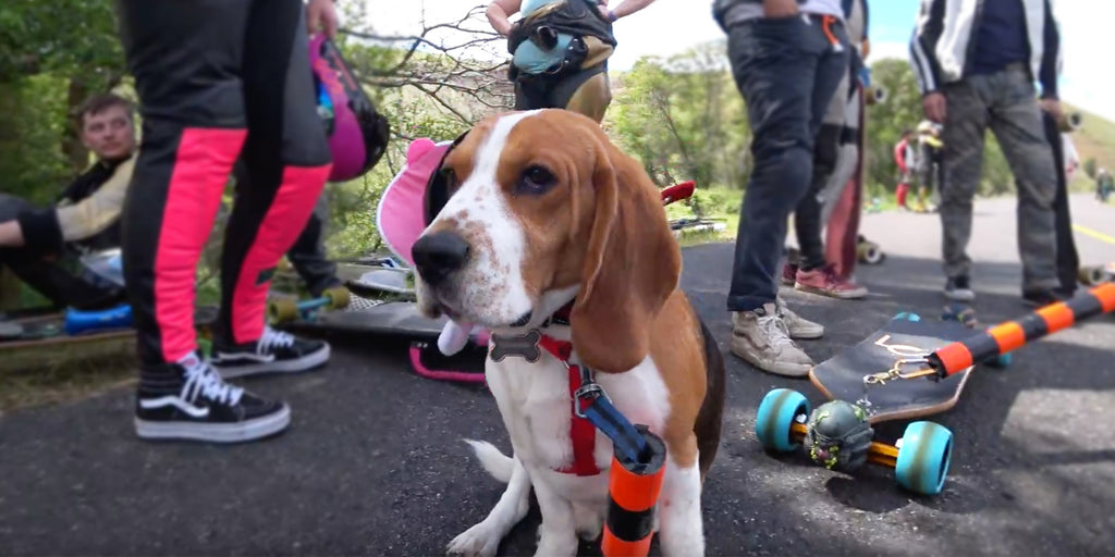 Jasper The Skate Dog is Cooler Than You, And He Prefers A LeanBoard Longboard