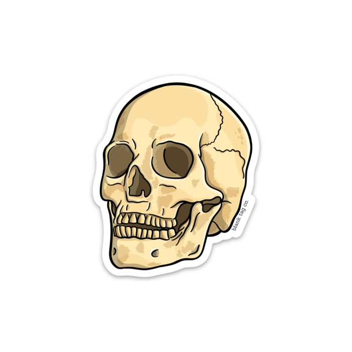 The Anatomical Skull Sticker