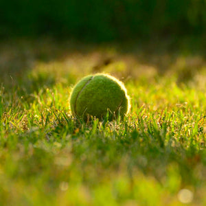 The 5 Best Lawn Games