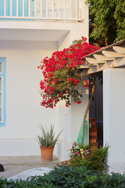 Best Patio Plants by Region