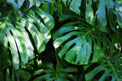 Tropical Plants for your Porch