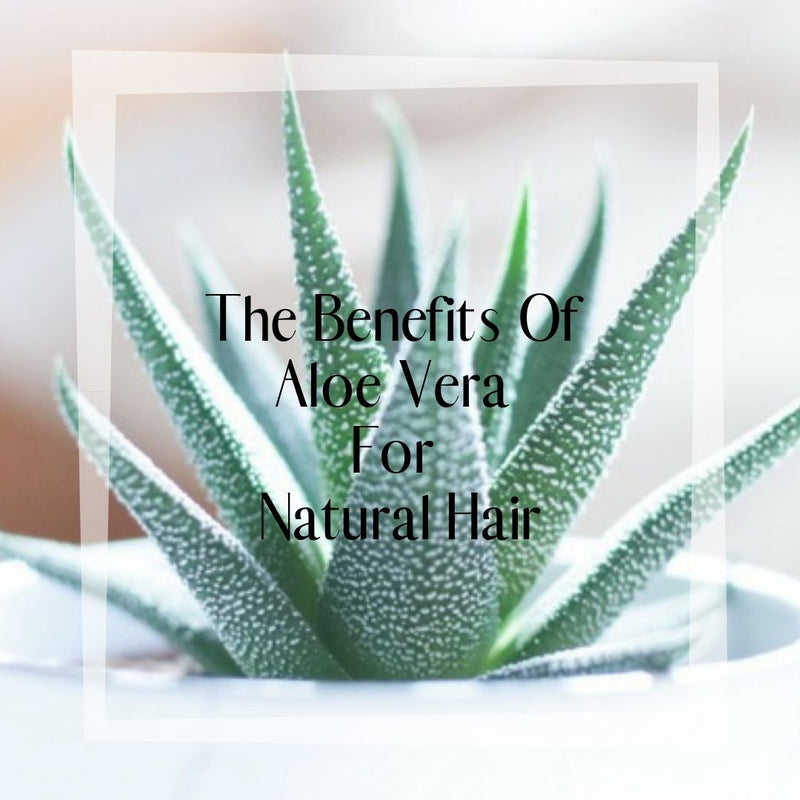 The Benefits Of Aloe Vera For Natural Hair
