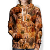 You Will Have A Bunch Of Vizslas - Hoodie V1