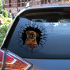 Get In - It's Time For Shopping - Griffon Bruxellois Car Sticker V2