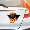 We Like Riding In Cars - Rhodesian Ridgeback Car/ Door/ Fridge/ Laptop Sticker V1