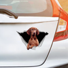We Like Riding In Cars - Vizsla Car Sticker V1