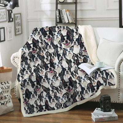 Boston Terrier Blanket V4