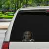 Can You See Me Now - Brittany Spaniel auto / deur / koelkast / laptop sticker V3