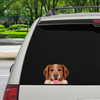 Can You See Me Now - Brittany Spaniel auto / deur / koelkast / laptop sticker V1