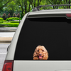 Can You See Me Now - Cockapoo Car/ Door/ Fridge/ Laptop Sticker V1