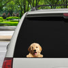 Can You See Me Now - Goldendoodle Car/ Door/ Fridge/ Laptop Sticker V1