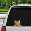 Can You See Me Now - Maine Coon Cat auto / deur / koelkast / laptop sticker V1