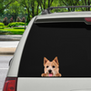 Can You See Me Now - Norwich Terrier Car / Door / Fridge / Laptop Sticker V1